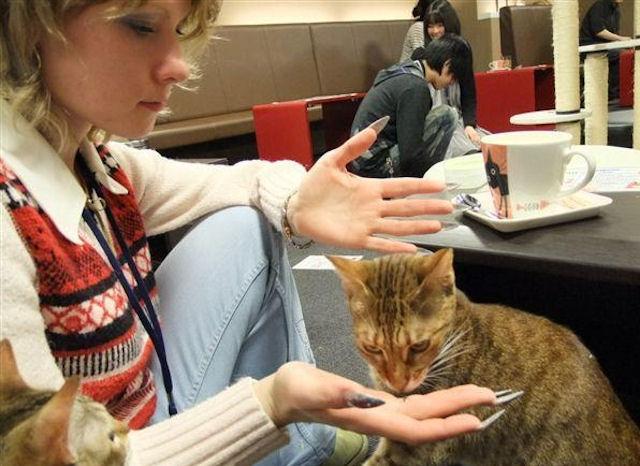 Жители Перми покорены кошачьим кафе