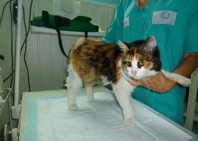 Жительница Челябинска спасла жизнь кошке