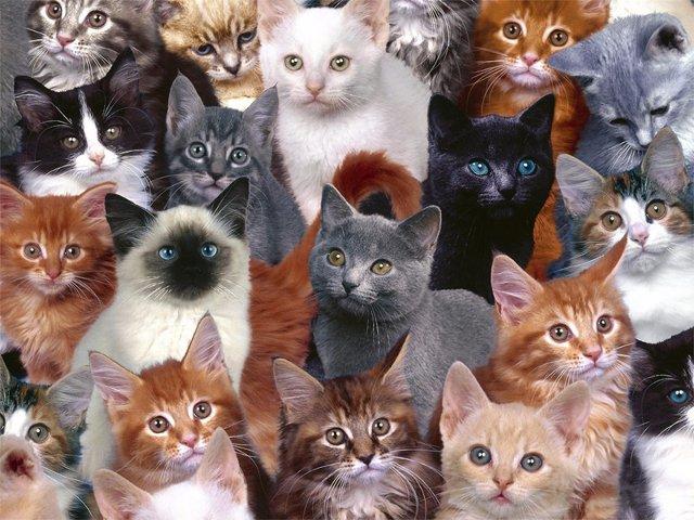 Жительница Новосибирска содержит в квартире 130 кошек
