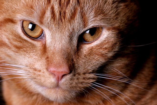 Ученые: животные способны видеть в ультрафиолетовом спектре
