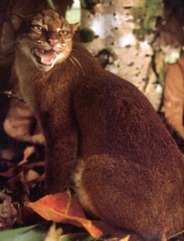 Зоологам удалось сфотографировать редкие породы кошек