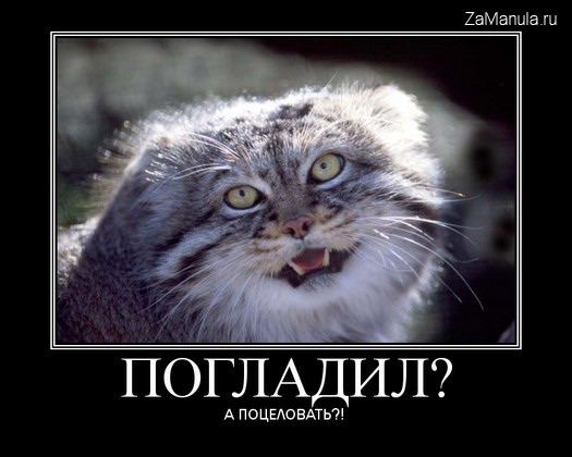 Женщина кошка смешные картинки