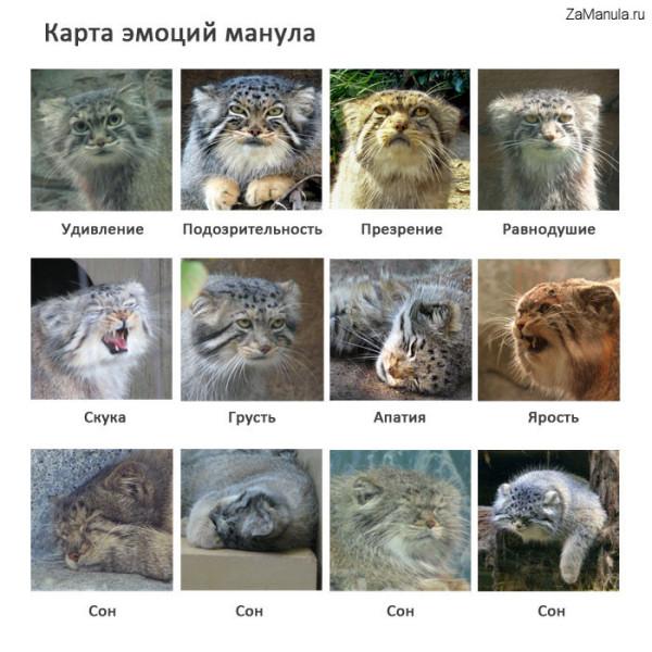 http://zamanula.ru/wp-content/uploads/2009/05/184.jpg