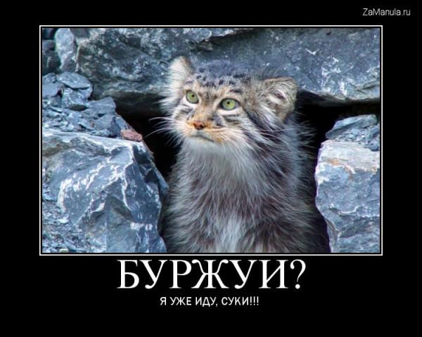 буржуй ru: