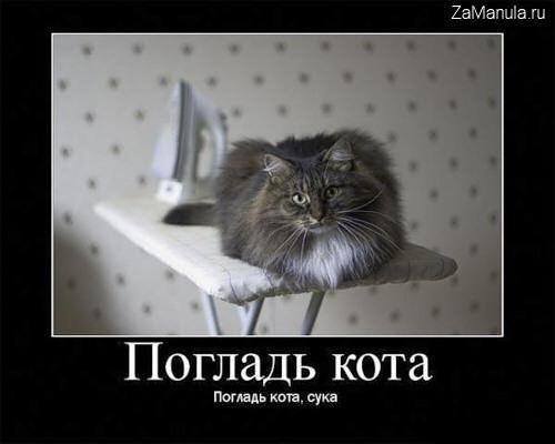 погладт кота погладь кота