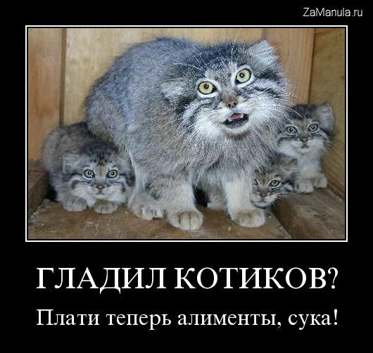 Гладил котиков?