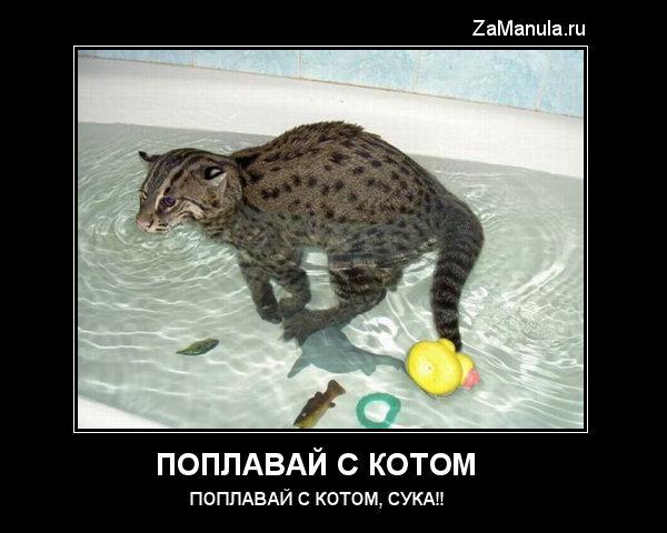 Поплавай с котом
