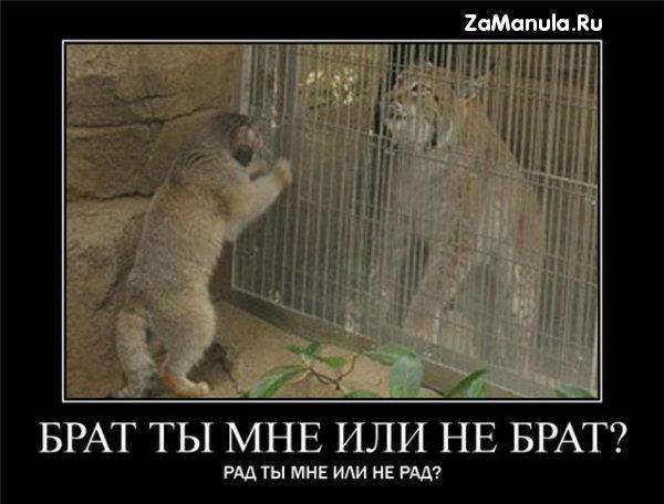 Брат ты мне или не брат?