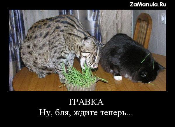 ТРАВКА