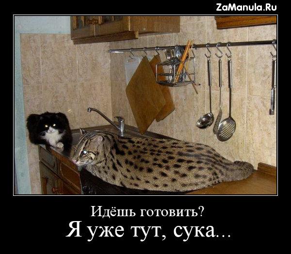 Идёшь готовить?