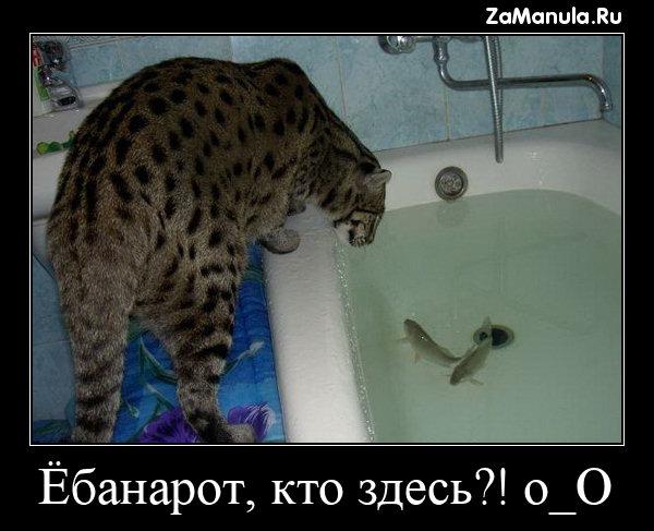 Ё*анарот, кто здесь?! o_O