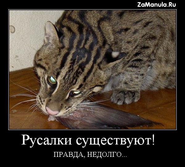 русалки существуют. фото