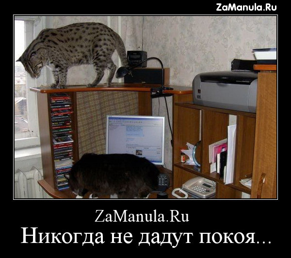 ZaManula.Ru