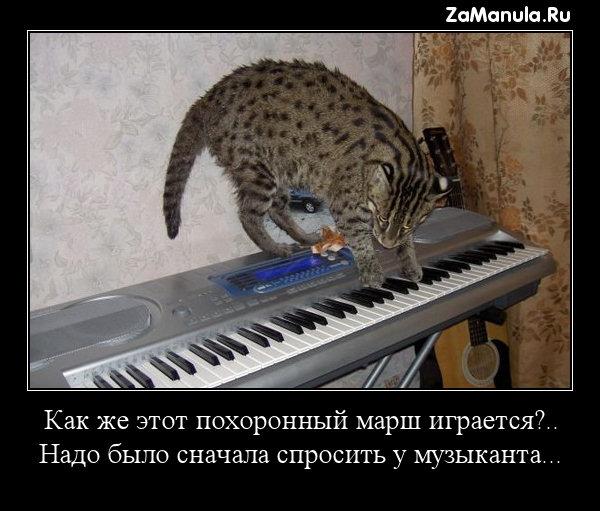 Надо было сначала спросить у музыканта...