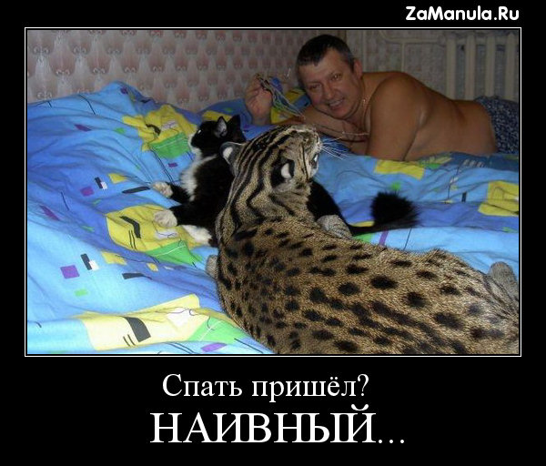 Спать пришёл?