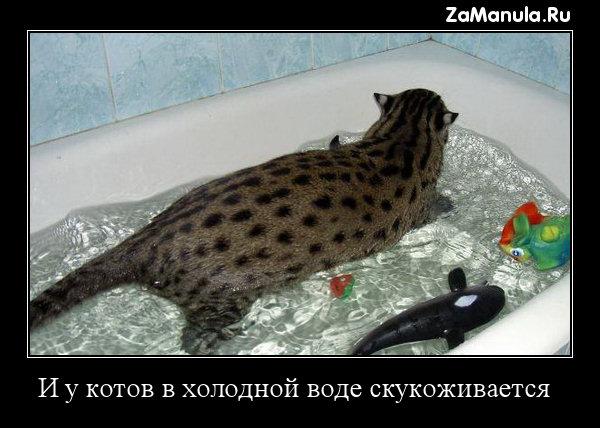 И у котов в холодной воде скукоживается