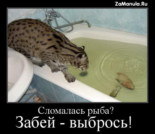 Сломалась рыба?