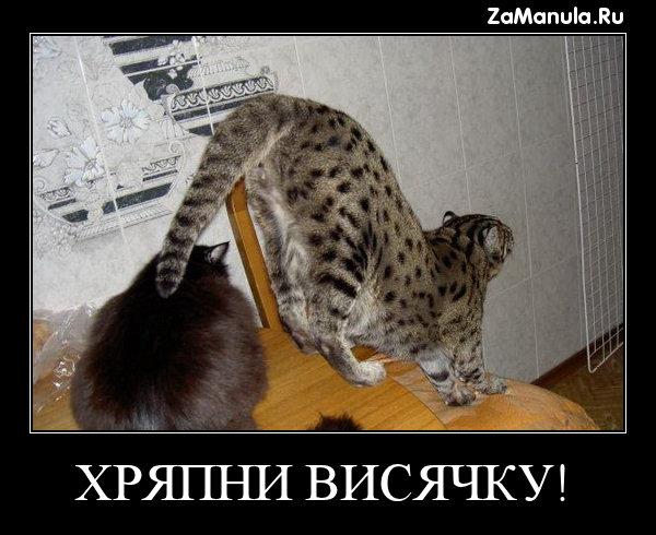 ХРЯПНИ ВИСЯЧКУ!