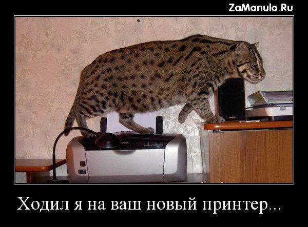 Ходил я на ваш новый принтер...