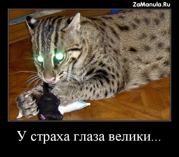 У страха глаза велики...