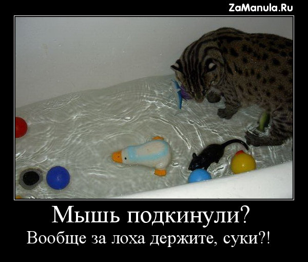 Мышь подкинули?