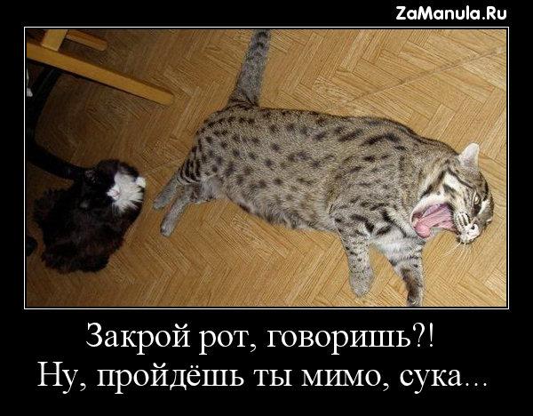 Закрой рот, говоришь?!