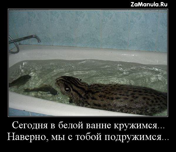 Сегодня в белой ванне кружимся...