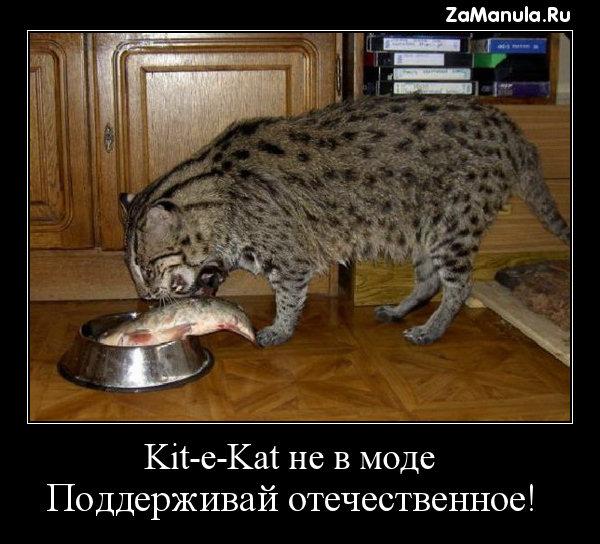 Kit-e-Kat не в моде