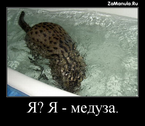 Я? Я - медуза