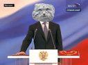 Манула в президенты!