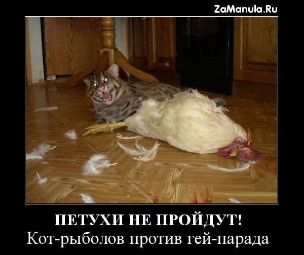 Петухи не пройдут!