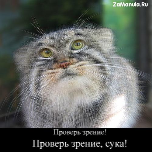 http://zamanula.ru/wp-content/uploads/2009/12/zrenie.jpg