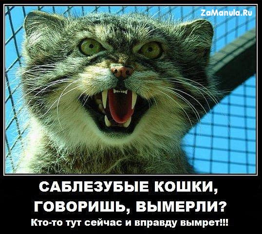 Саблезубые кошки, говоришь, вымерли?