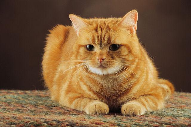В городе Южном кот две недели провел в вентиляционной шахте многоэтажки