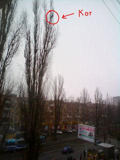 В Одессе кошка три дня жила на макушке дерева