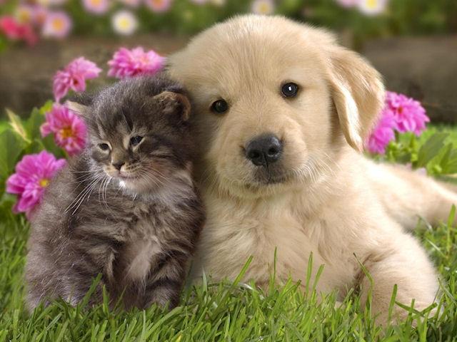Ученые выяснили кто умнее - кошка или собака