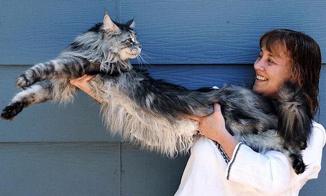 Умер самый длинный в мире кот