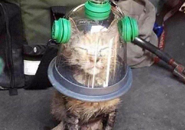 В Новом Орлеане пожарные при помощи кислородной маски спасли котенка