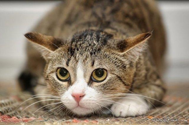 Кошки довольно часто испытывают стресс