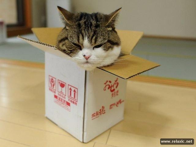 На YouTube разместили список популярнейших котов Интернета