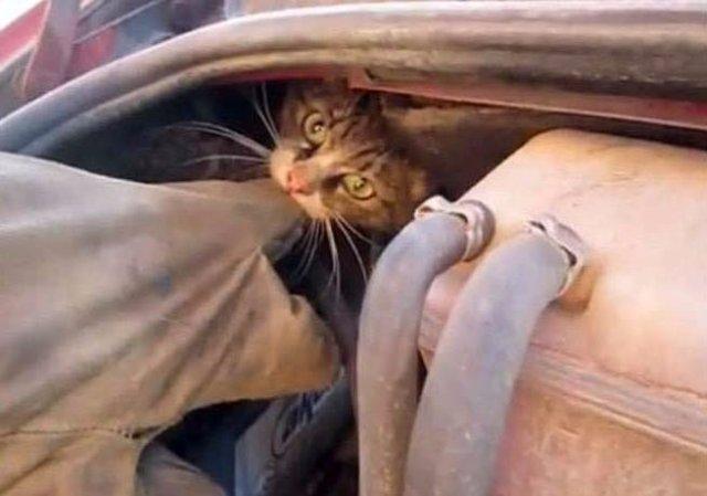 Спасение кота, застрявшего в автомобиле