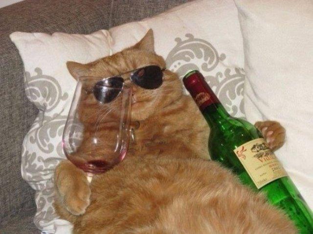 Японцы создали вино для кошек