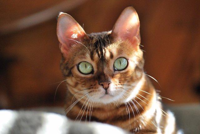 Кошки - синоптики
