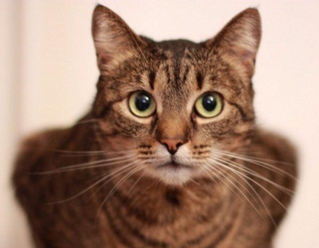 Причины популярности кошек