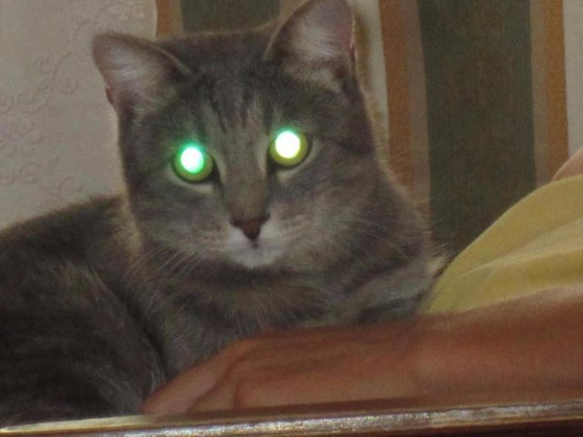 В Кемерово заведено уголовное дело на убийцу кота