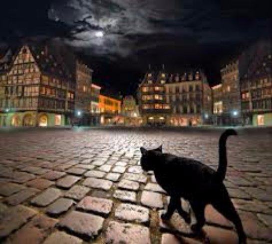 Кошка Холли преодолела огромное расстояние, чтобы вернуться домой