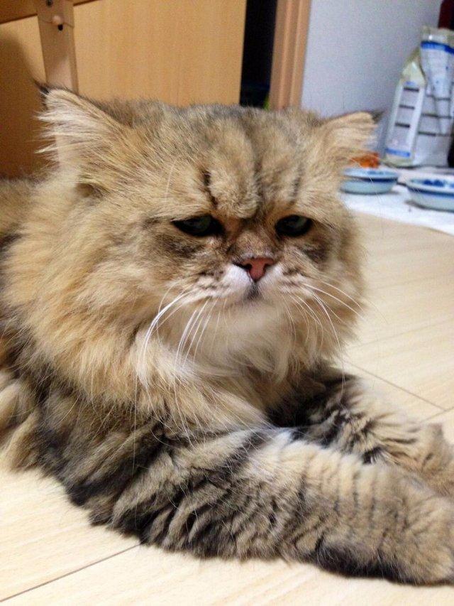 Кот из Калининграда стал жертвой живодера
