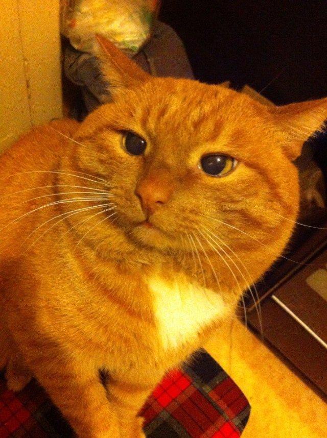 В Перми объявлен конкурс на самого возрастного кота