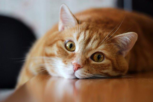В Саратовской области кот победил гадюку