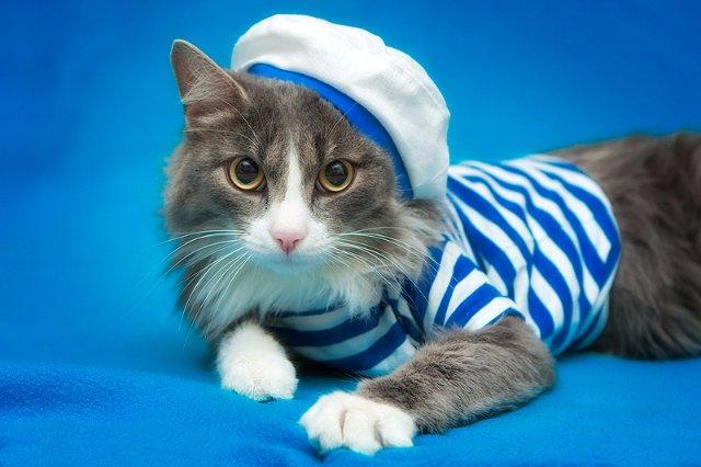 В Эстонии требуется корабельный кот